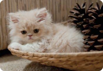 Имя для белого котика