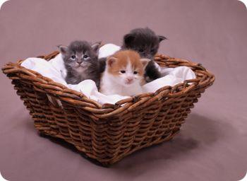 Три милых котенка