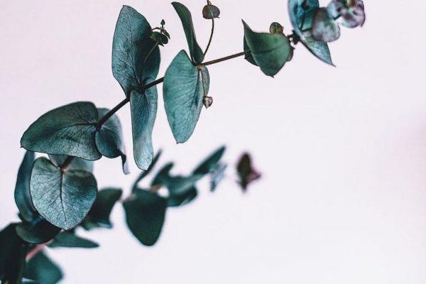 Преимущества зеленого растения
