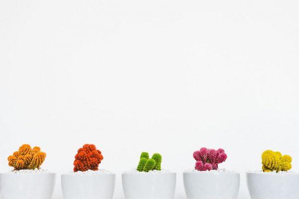 Каждый цветок — это душа, расцветающая в природе